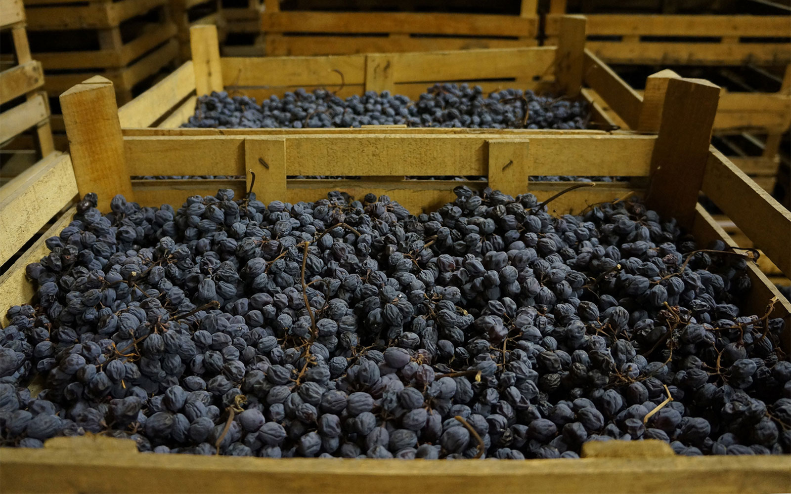 Discover Amarone Wine