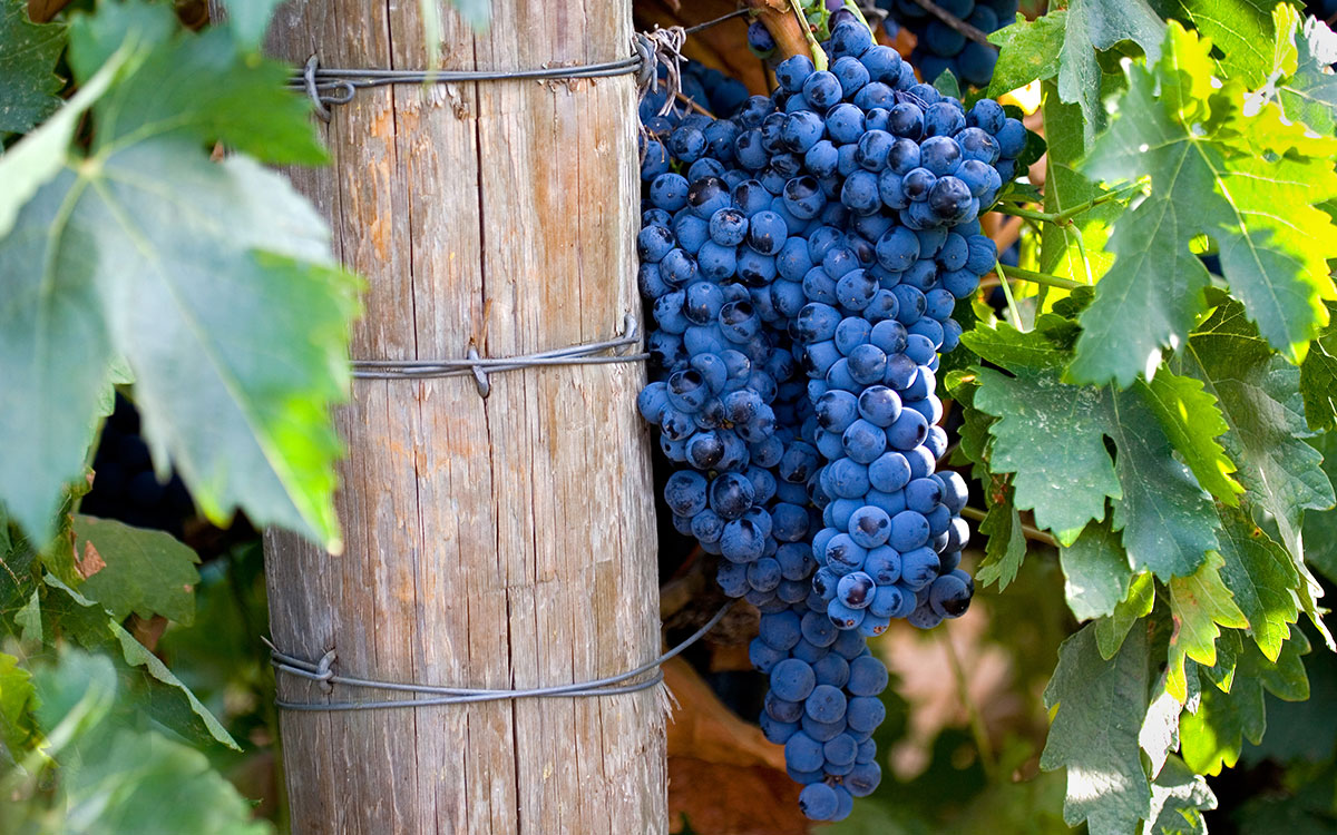 Introducing Vin Bon's Cabernet Franc/Petit Verdot Blend