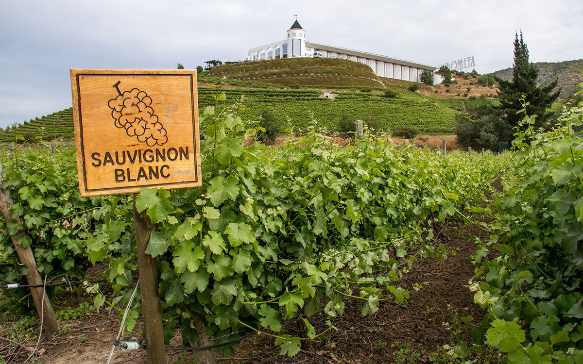 Introducing Vin Bon's Sauvignon Blanc/Chardonnay Blend